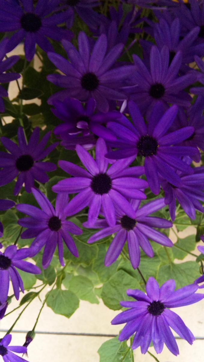 Flowers_20120317