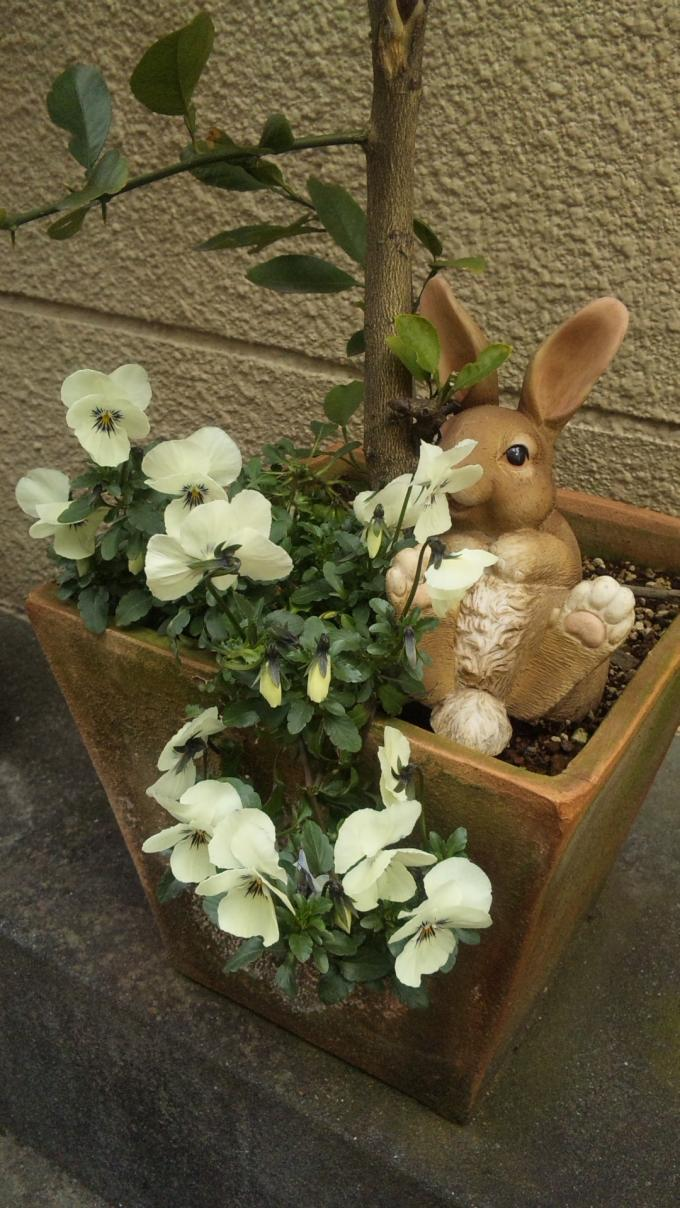 Flowers_20120319