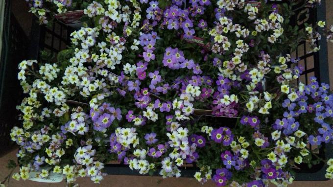 Flowers_20120322