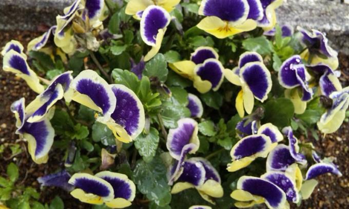 Flowers_20120324