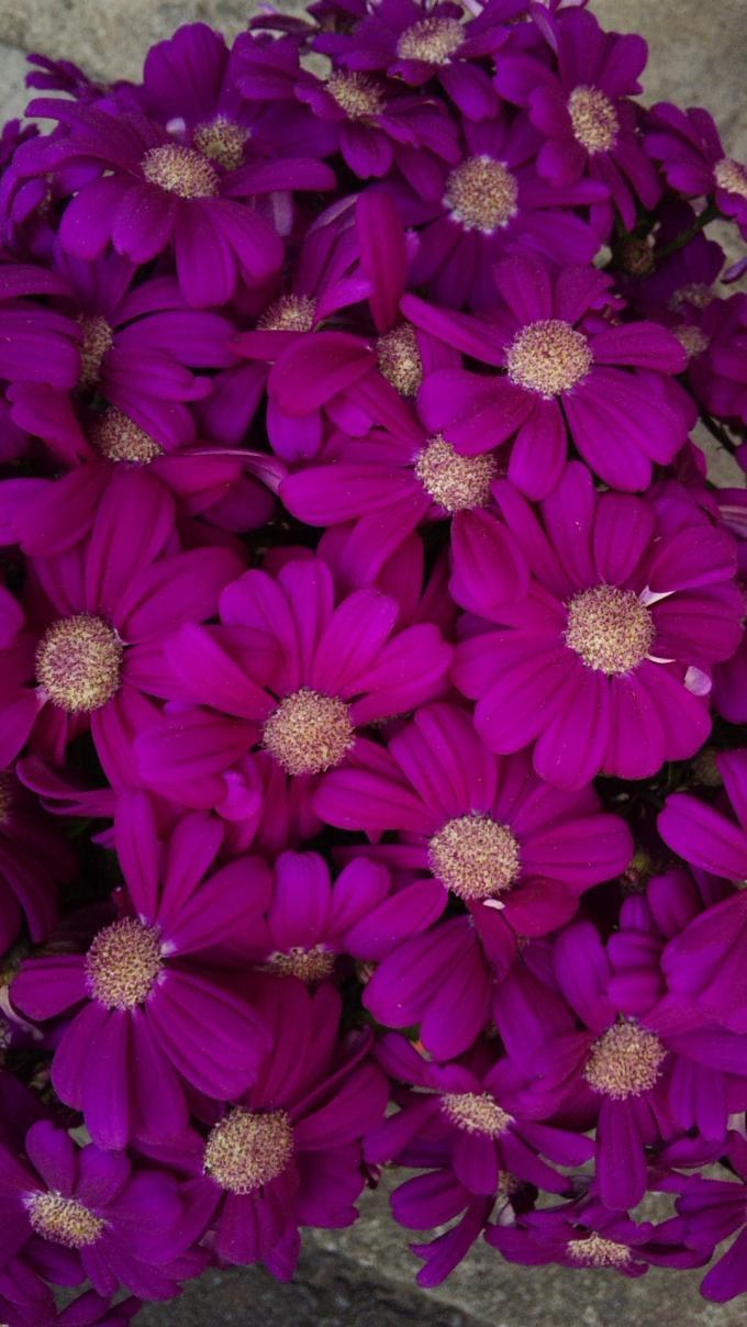 Flowers_20120326