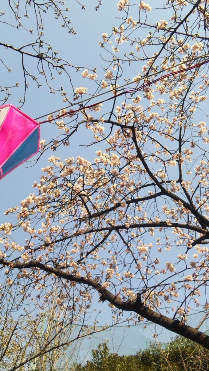 KANZAKURA_20120327