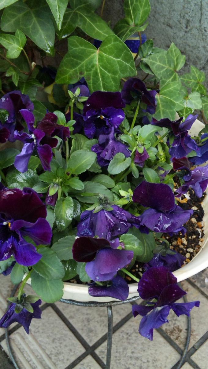 Flowers_20120328