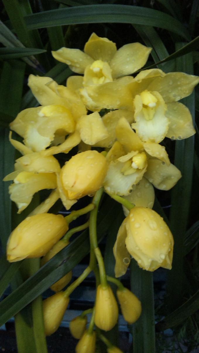 Flowers_20120403