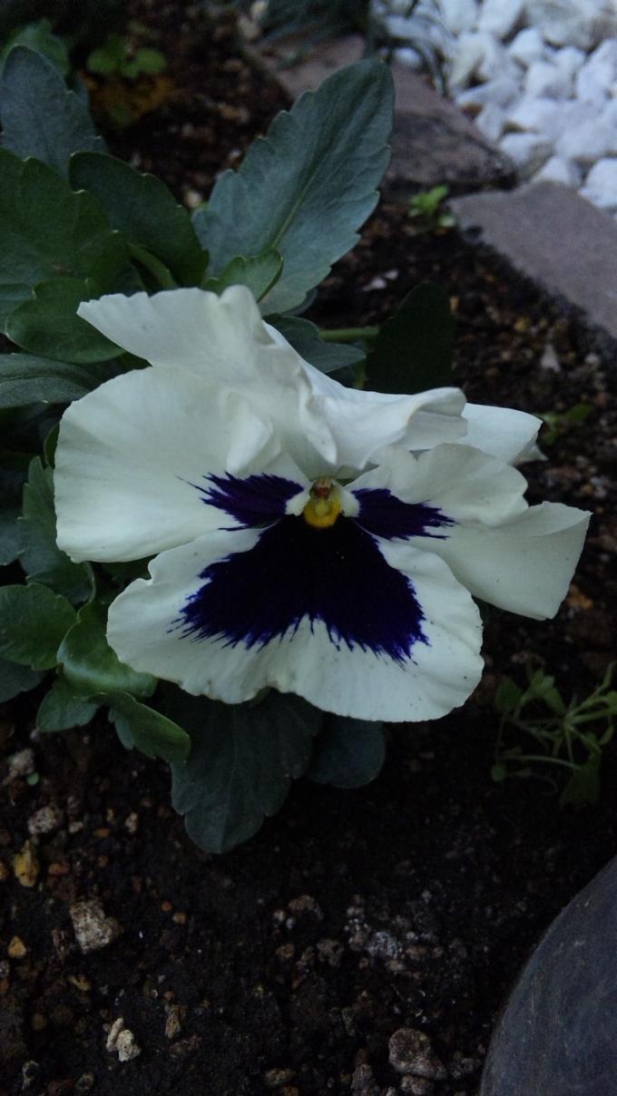 Flower_20120404