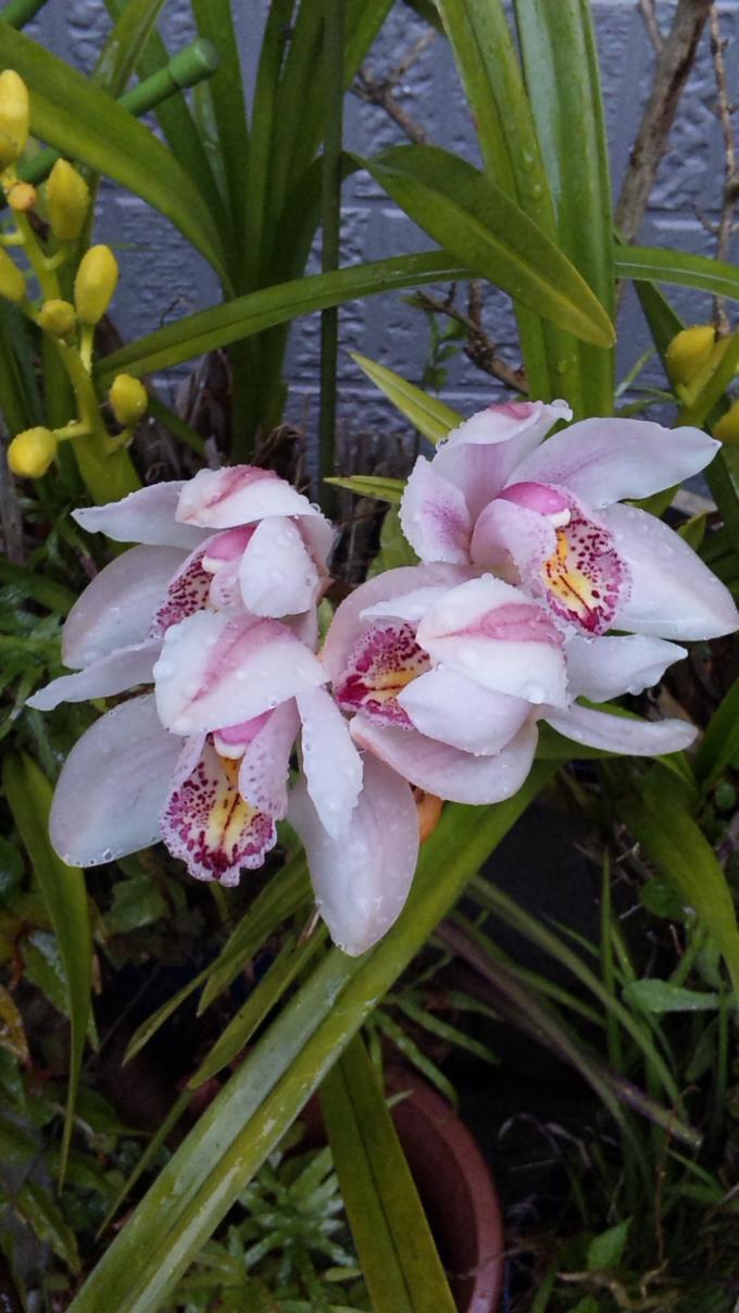 Flowers_20120404