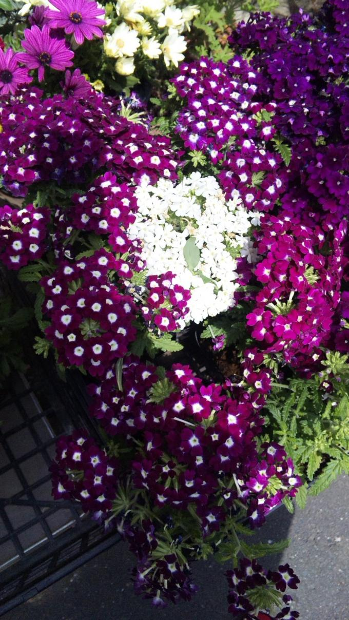 Flowers_20120417