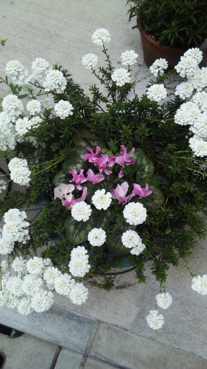 Flowers_20120418