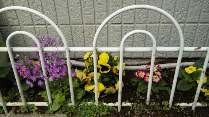 Flowers_20120419