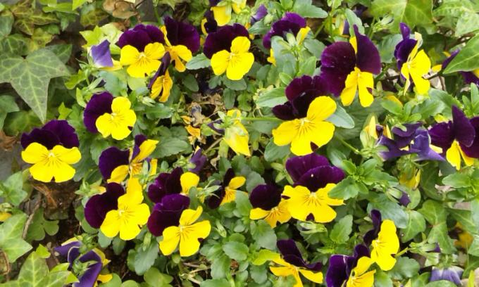 Flowers_20120421