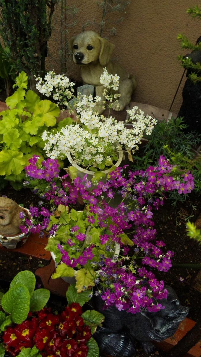 Flowers_20120423