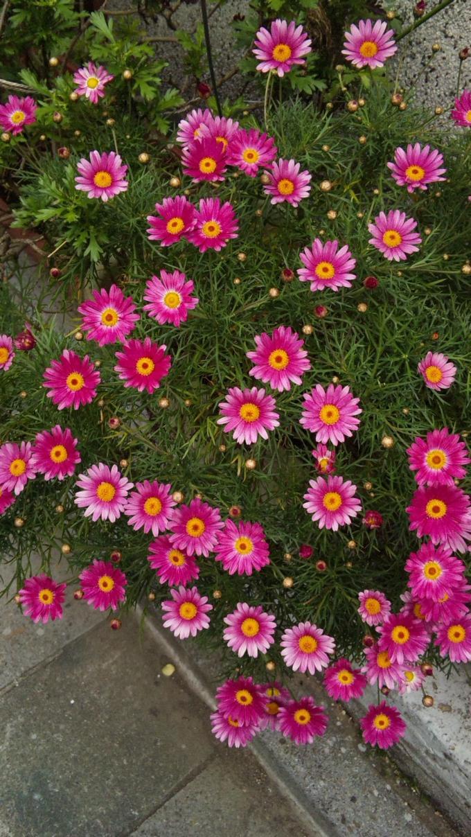 Flowers_20120424