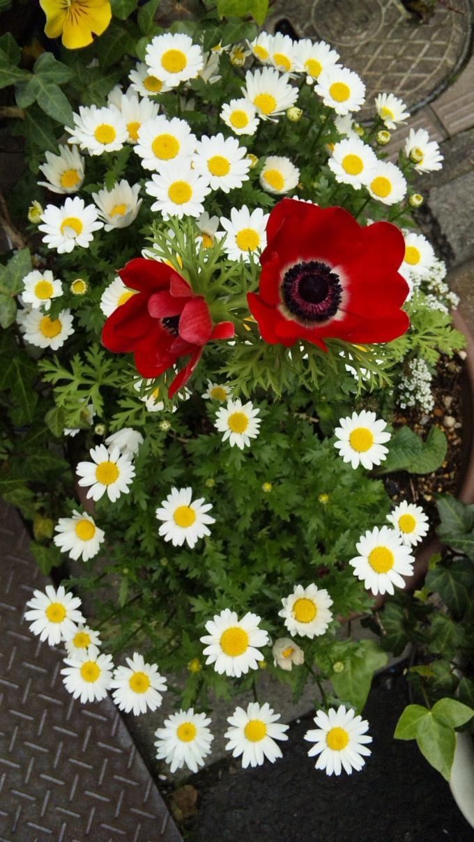 Flowers_20120425
