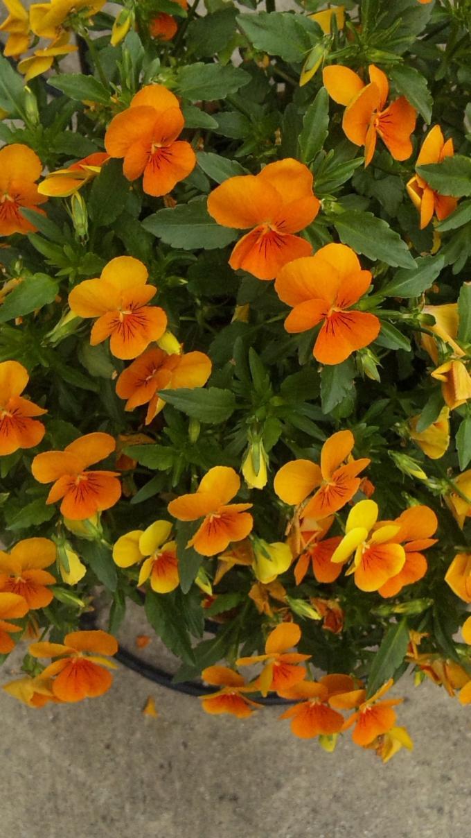 Flowers_20120430