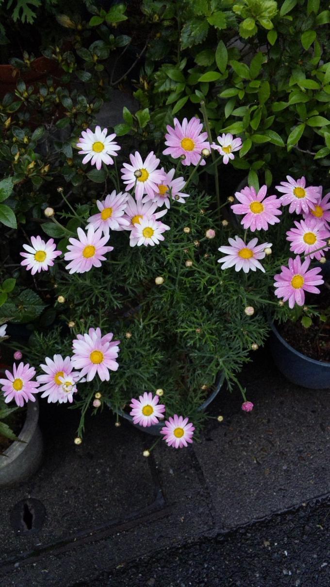 Flowers_20120501