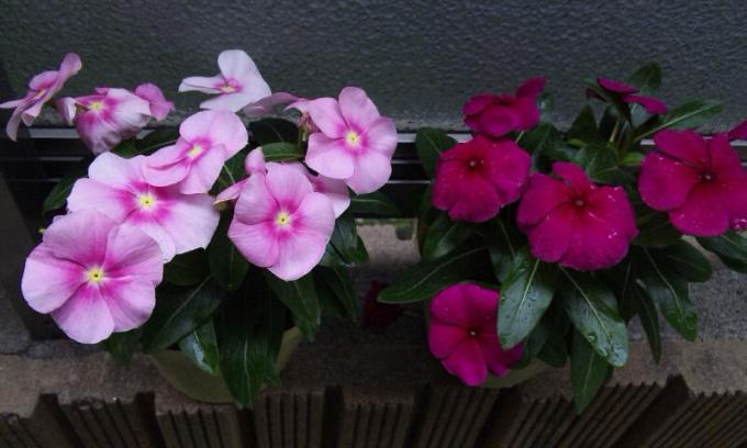 Flowers_20120502