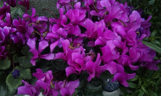 Flowers_20120507