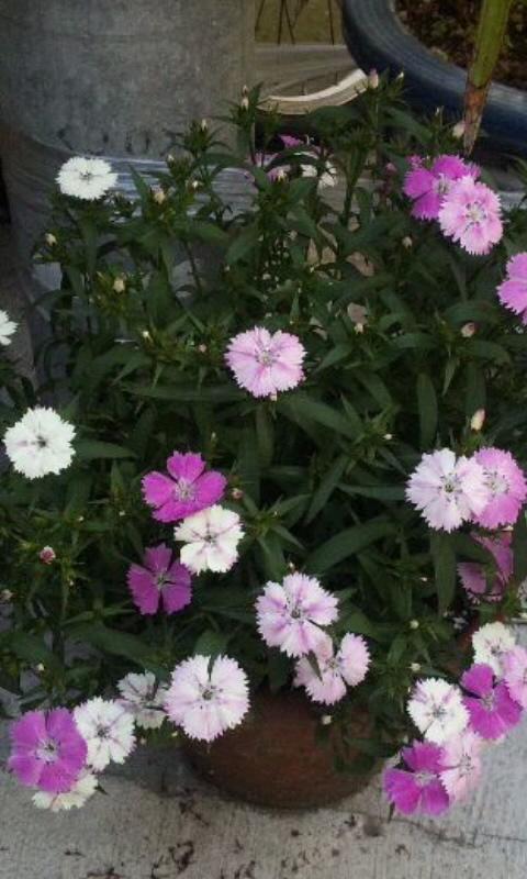 Flowers_20120509