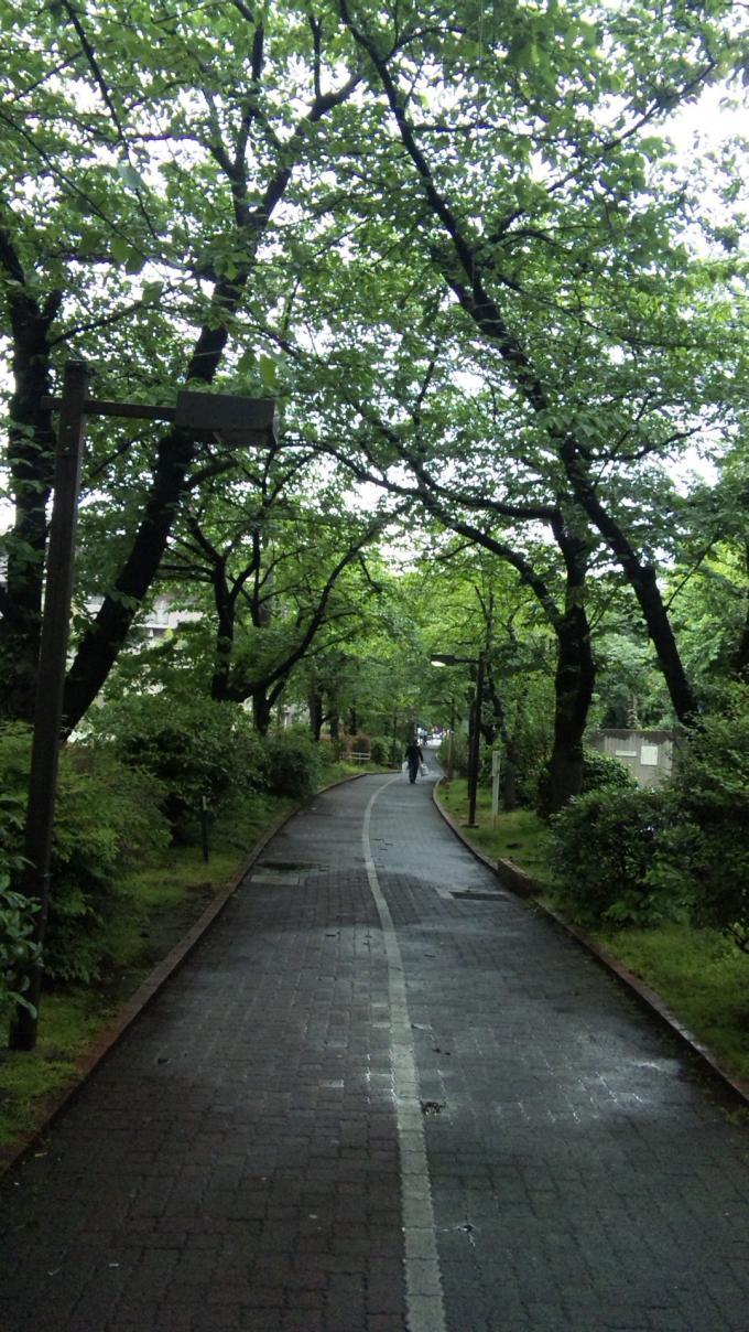 GREEN  ROAD_20120510
