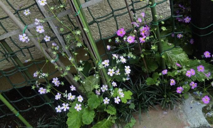 Flowers_20120510