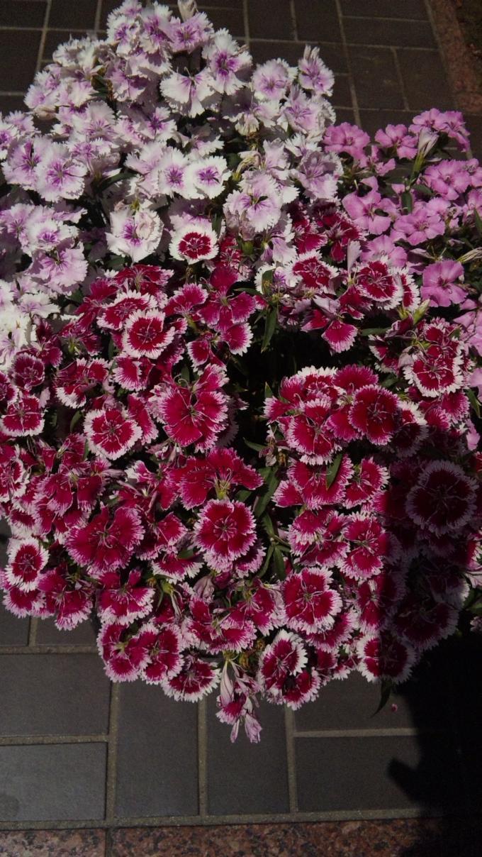 Flowers_20120512