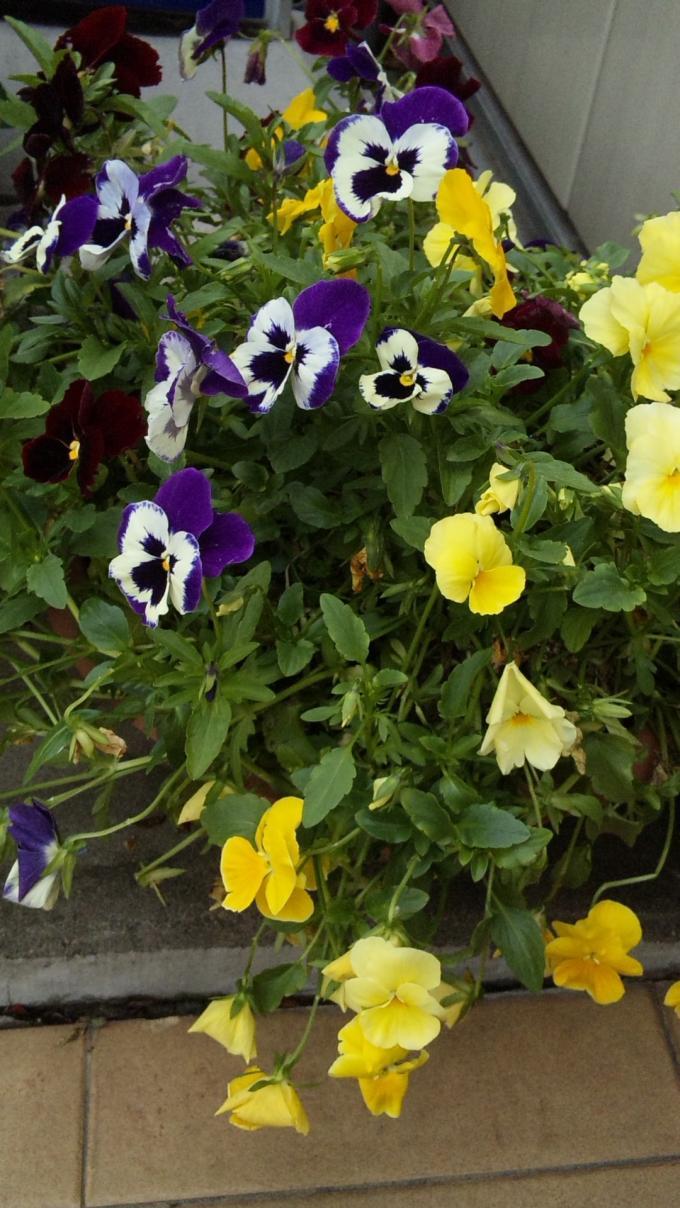 Flowers_20120514