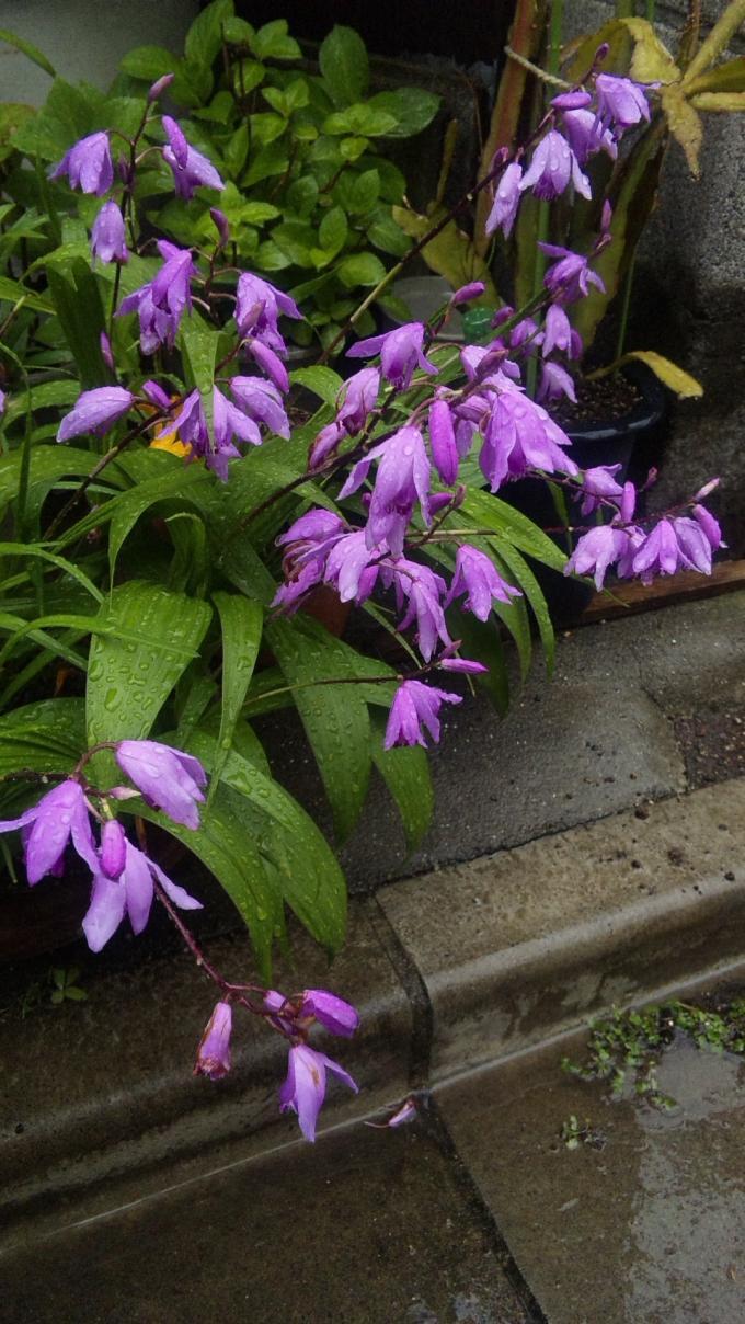 Flowers_20120515