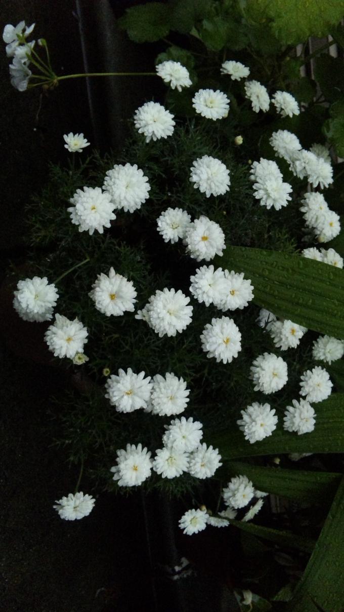 Flowers_20120516