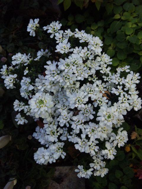 Flower_20101206