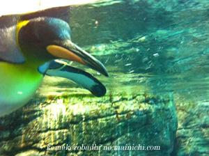 penguin2010.jpg