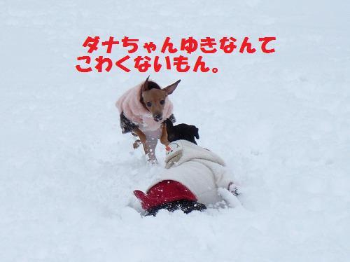 yuki11 (2)