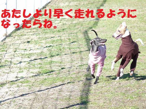 mi13_20101119182959.jpg