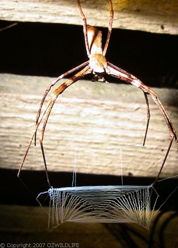 spider0002.jpg