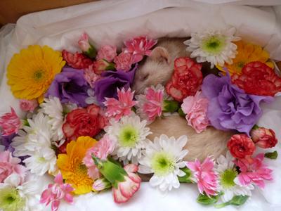 お花畑で眠るように・・・