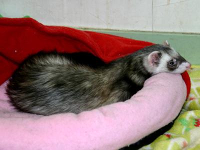 『眠いなぁ・・・』