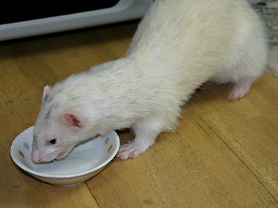『食べて元気に!』