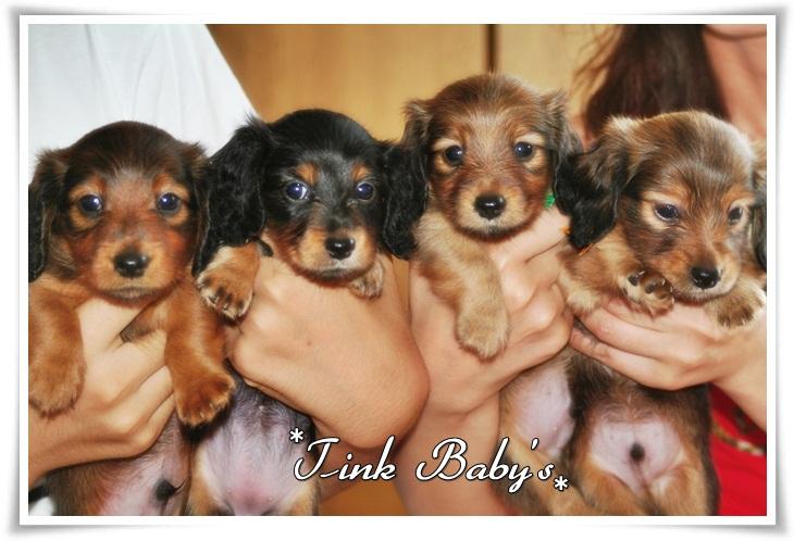 Tink Babys