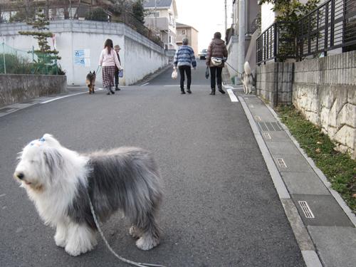 お散歩しながら