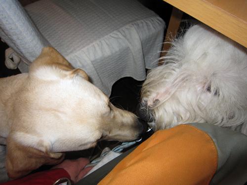 テーブルの下でお鼻ツンツン