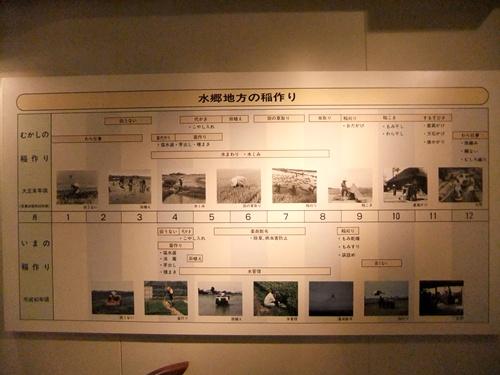2012.6.17 佐原あやめ祭り 048