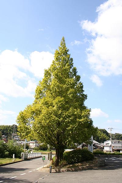 葉が落ちた木0