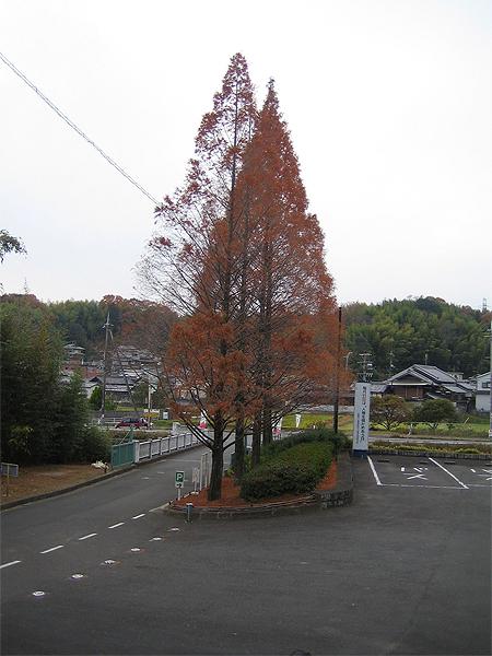 葉が落ちた木4