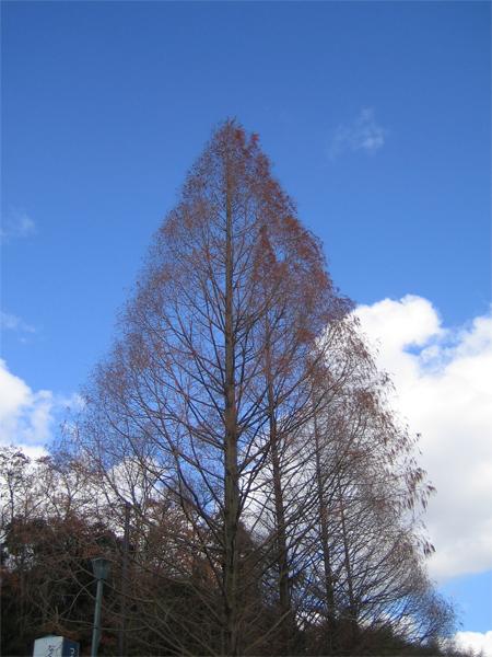 葉が落ちた木2