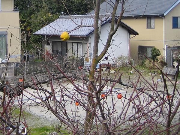 葉が落ちた木3