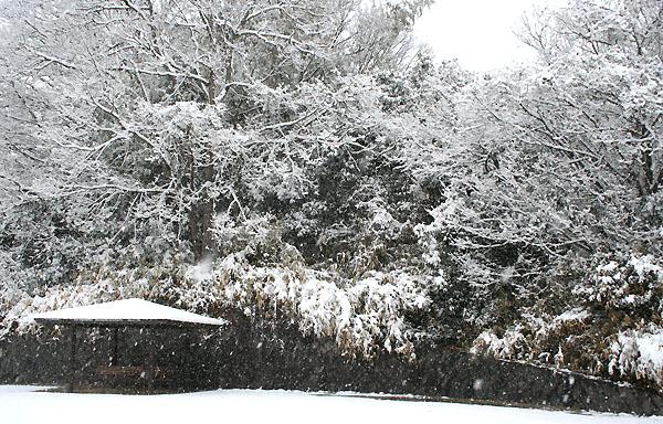雪のお化け