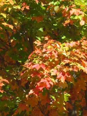 紅葉の始まり-2, 2014-10-13