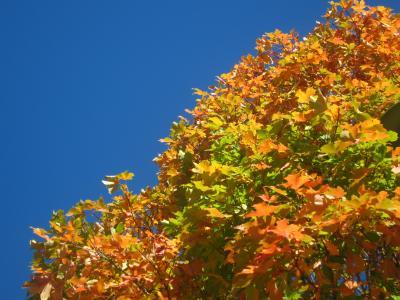 紅葉の始まり-3, 2014-10-13