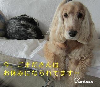 ブログ 10.11 ① IMG_3817