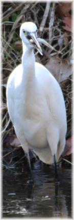 140101E 145サギ捕食C