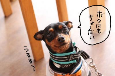 2012_02_25_9999_16.jpg